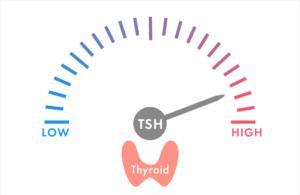 甲状腺刺激ホルモンの役割