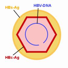 Hbs抗原